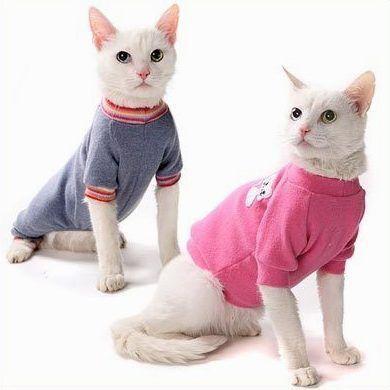 Cat Oblečenie