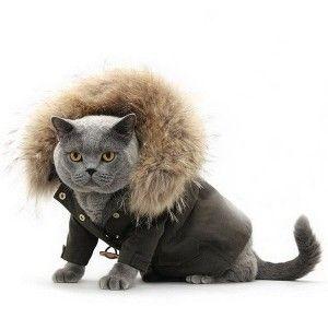 Котка дрехи