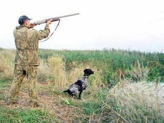 Lov na divlje životinje