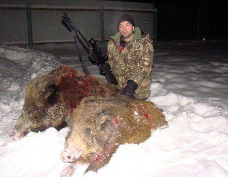 Lovu na divlje svinje sa Ambush
