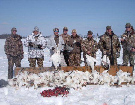 Lov za snijeg guska