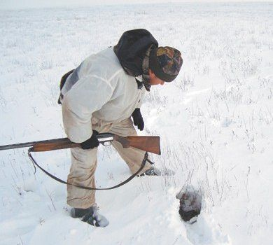 Lov na zeca zeca zimu