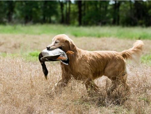 Lovački pas rađa sa slikama i imenima