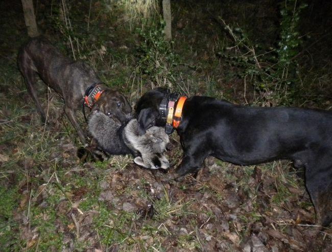 10 najboljih pasmina lovačkih pasa