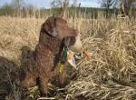 Lovački pas pasmine