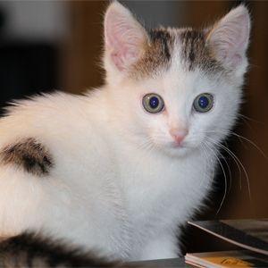 Цвят и характер на котки - котка колор