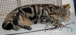 Farba oprava síce mačka
