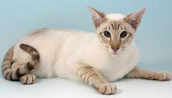 Farba mačkou linkspoynt