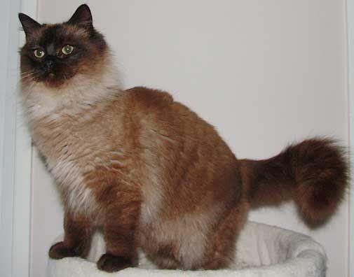 otrhanec mačka mačka