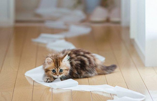 Mačiatko hrá s papierom