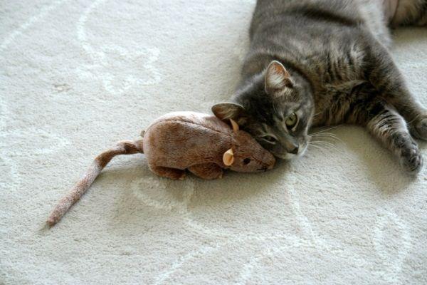 Mačička s veľkou hračkou myšou