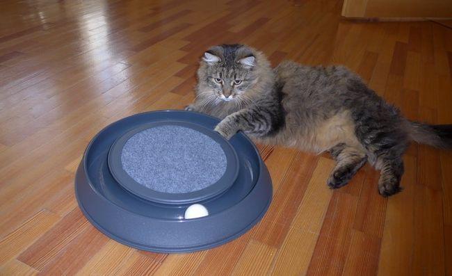 Módne hračka pre mačky a psov