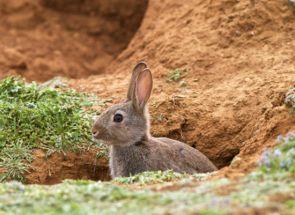 Основи на отглеждане зайци в дупки от А до Z