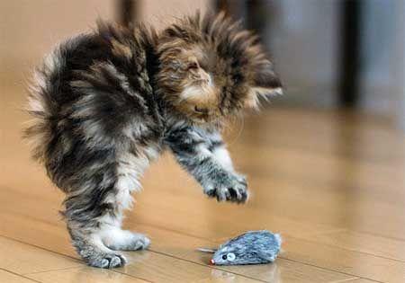 Особености физиология новородени котенца.