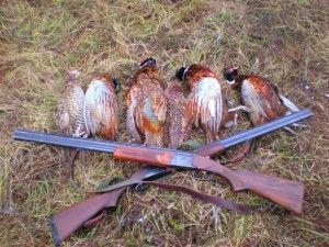 Ima lov fazana u zimskom periodu