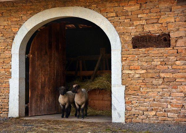 stâna de capital cu două oi