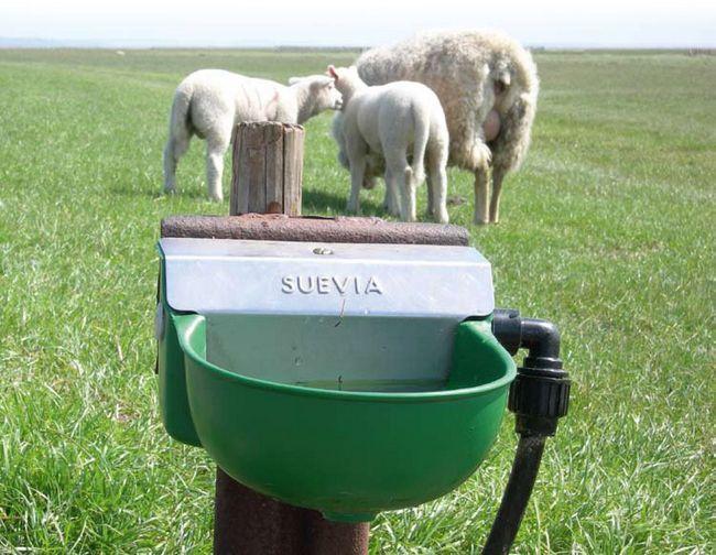Bețiv pentru oi în pășune