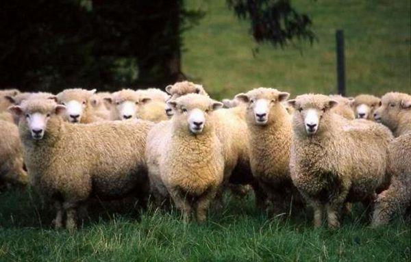 Kuibyshev oi cireadă