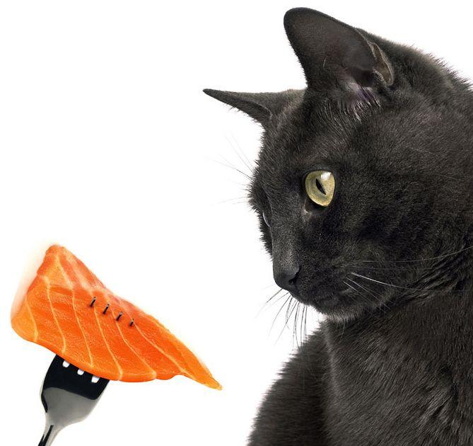 nadváhou mačky