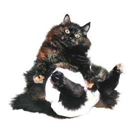 Памперси за котки