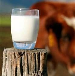 Čerstvé mlieko - výhody a poškodzuje. Čerstvé mlieko je užitočné? Prečo nemôžu piť čerstvé mlieko?)