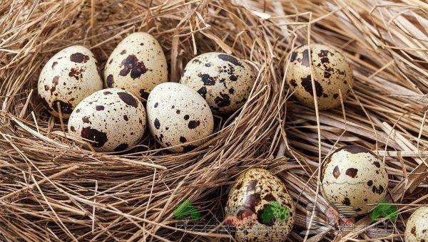 Ouăle de prepeliță într-un coș