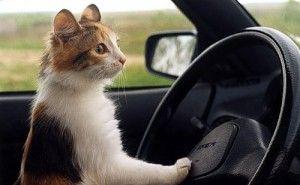 Транспортни котки