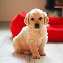 Prvi štene u kući