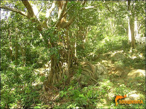 Vietnamul de Sud. Jungle. Foto, Foto