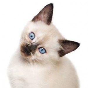 Prečo kýchanie mačku?