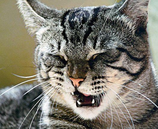 Prečo kýchanie mačku