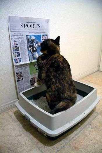 Mačka v záchodovej misy