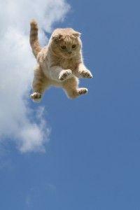 Preto mačky pristáť na nohy?