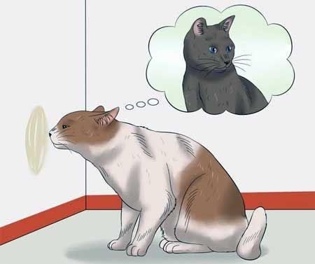Cat označí územie
