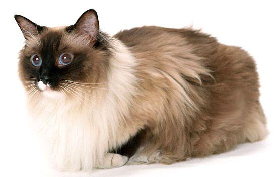 Vyzliekanie u mačiek