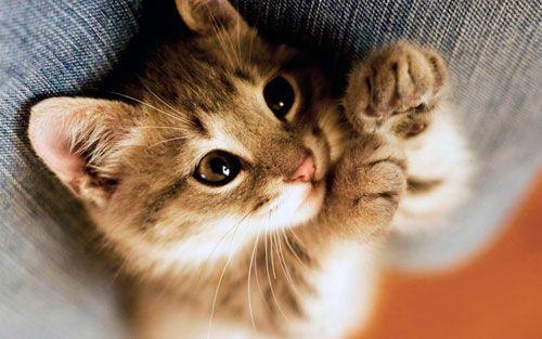 Prečo mačky pradie a ako to robia?