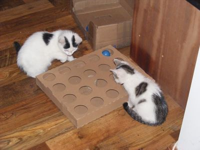 Hrať s mačkami užitočných