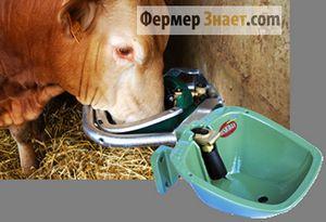 Adapatoare pentru vaci: varietatea metodelor și mai ales de vite de udare