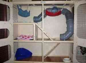 Cage pentru rukami4 lui dihor