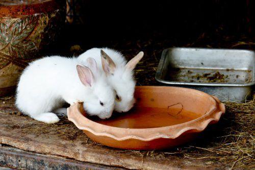 Uluce pentru iepuri