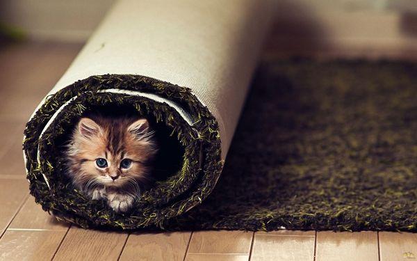 Mačiatko v dome