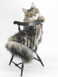 Използването на котки