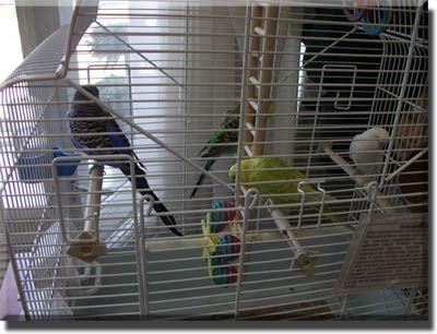 Facilități pentru păsări de curte