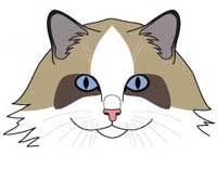 pisici pisica rasa calic. bot