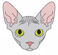 rasa Sphynx de pisici. bot