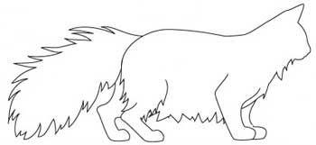 Rasa Pădurea norvegiană Cat. corp