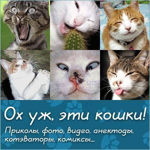 mačacích plemien s fotkami, mačacích plemien, všetky plemená mačiek, mačací plemená všetko s fotografiami, mačacích plemien s obrázkami