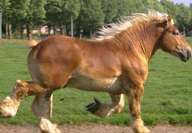 Foto sovietskeho plemena koní