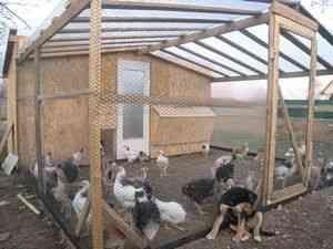 Un coteț pentru găini ouătoare cu mâinile lor: un pas cu pas de construcție de la A la Z