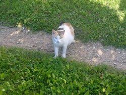 Správanie mačiek: nezávislý, ale napriek tomu spoločenských zvierat